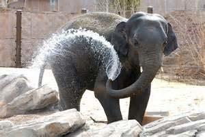 Elephant-Denver-Zoo-300x200