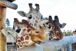 Cheyenne Mountaint Zoo